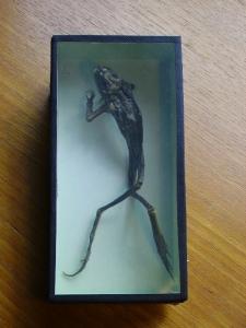 toad box