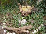 Herne Altar and Dragon Stump